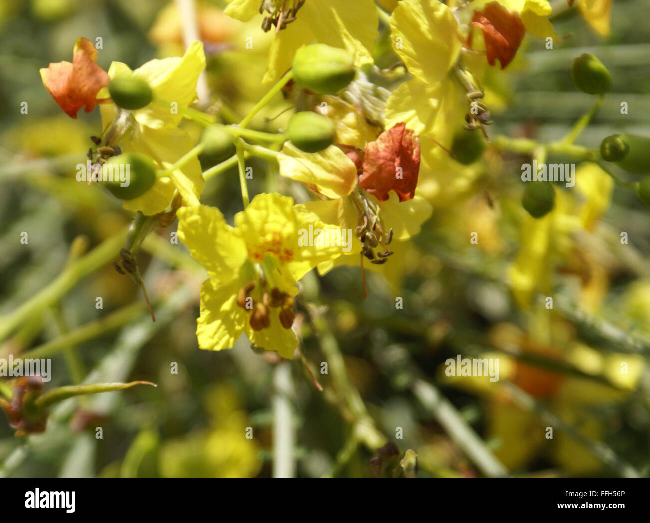 Spiny Shrub Stock Photos Spiny Shrub Stock Images Alamy
