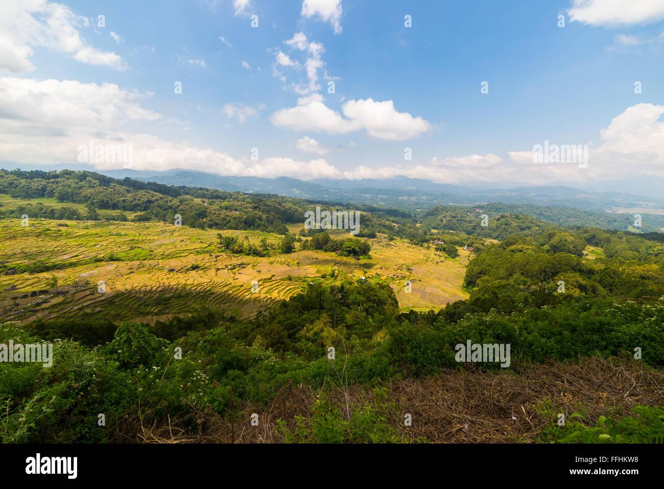 Expansive landscape and bright rice fields on the mountains of Batutumonga, Tana Toraja, South Sulawesi, upgrowing - Stock Image