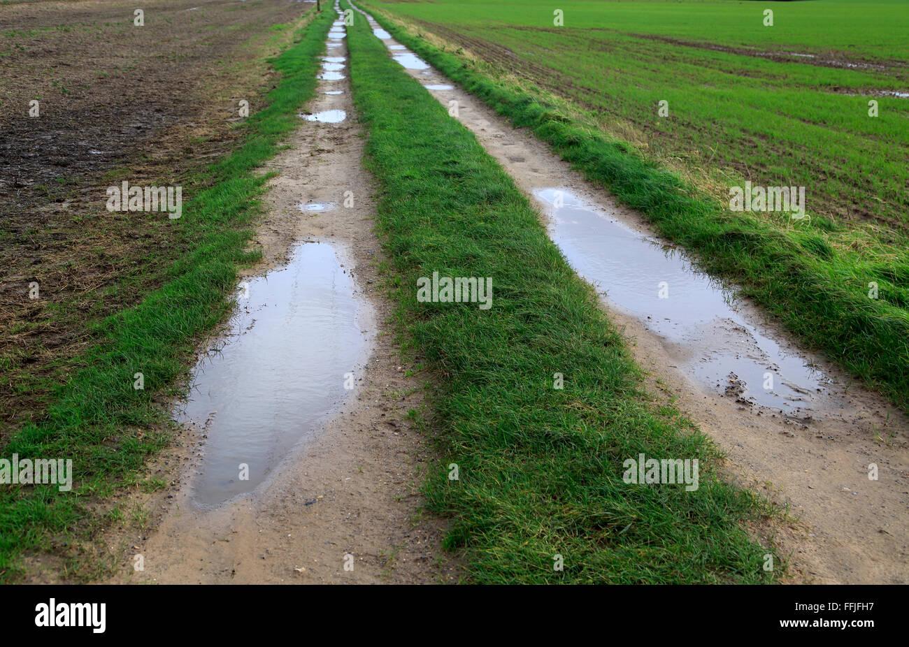 Puddles in farm track crossing fields, Alderton, Suffolk, England, UK - Stock Image