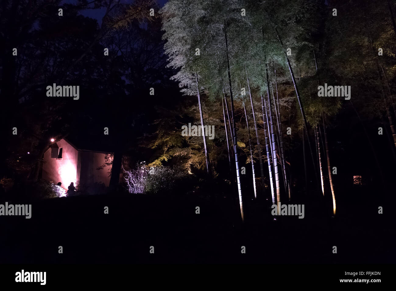 Rikugien Garden, Tokyo, Japan, Asia. City park, gardens in fall season, autumn foliage on trees, night lights. Japanese - Stock Image
