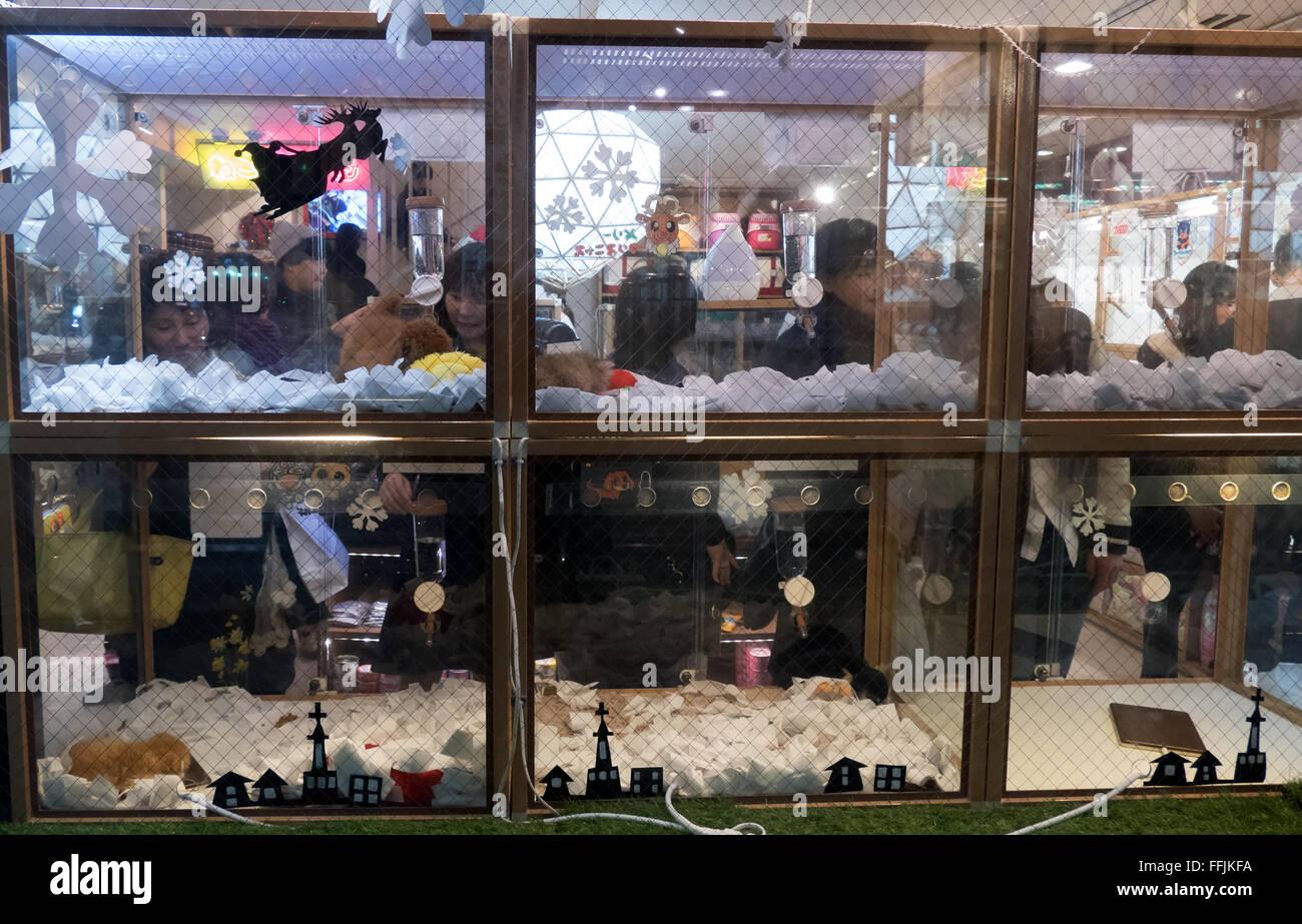 pet shop in tokyo japan asia japanese people shopping. Black Bedroom Furniture Sets. Home Design Ideas