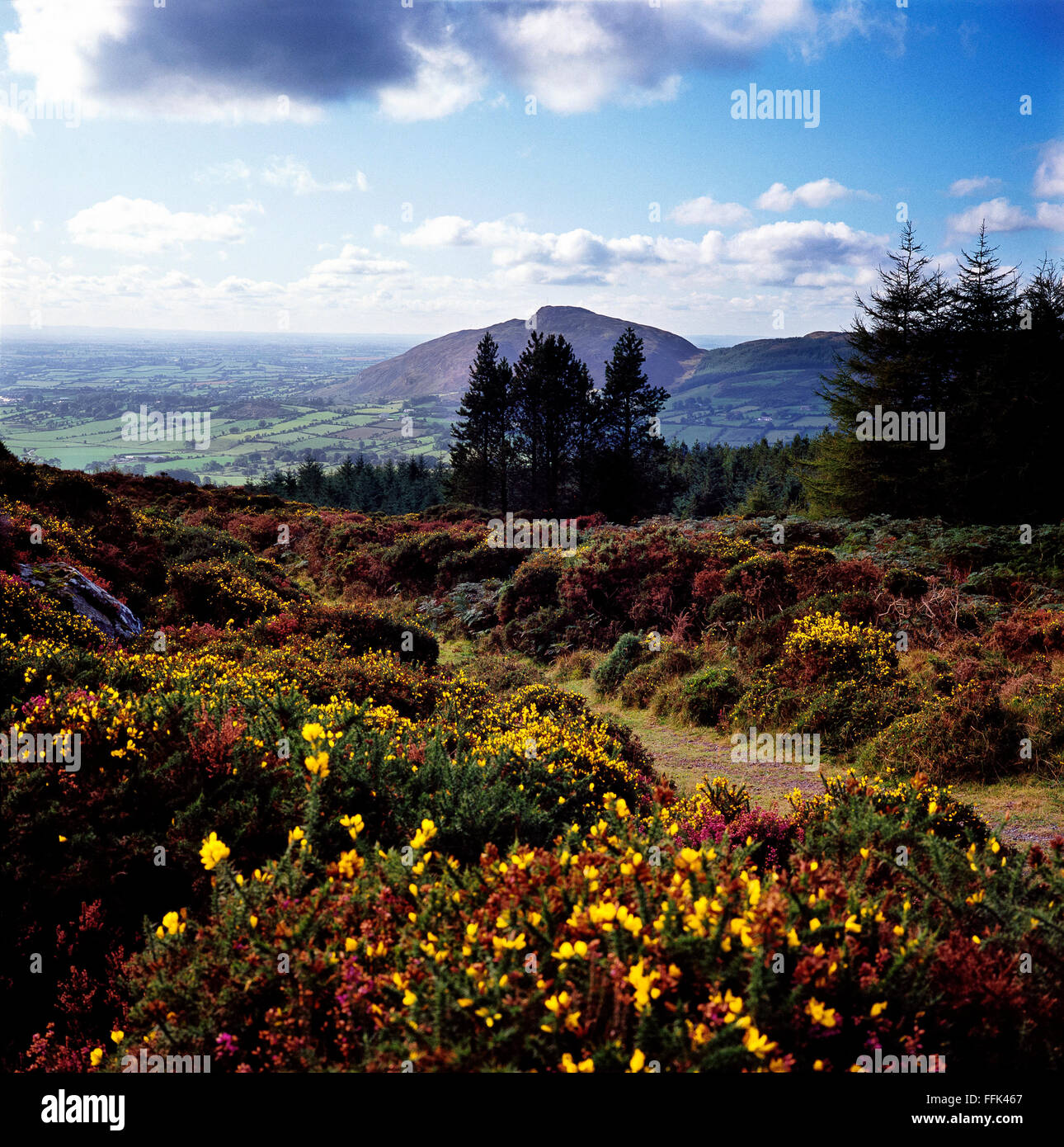 View from Slieve Gullion Ring of Gullion South Armagh Northern Ireland - Stock Image