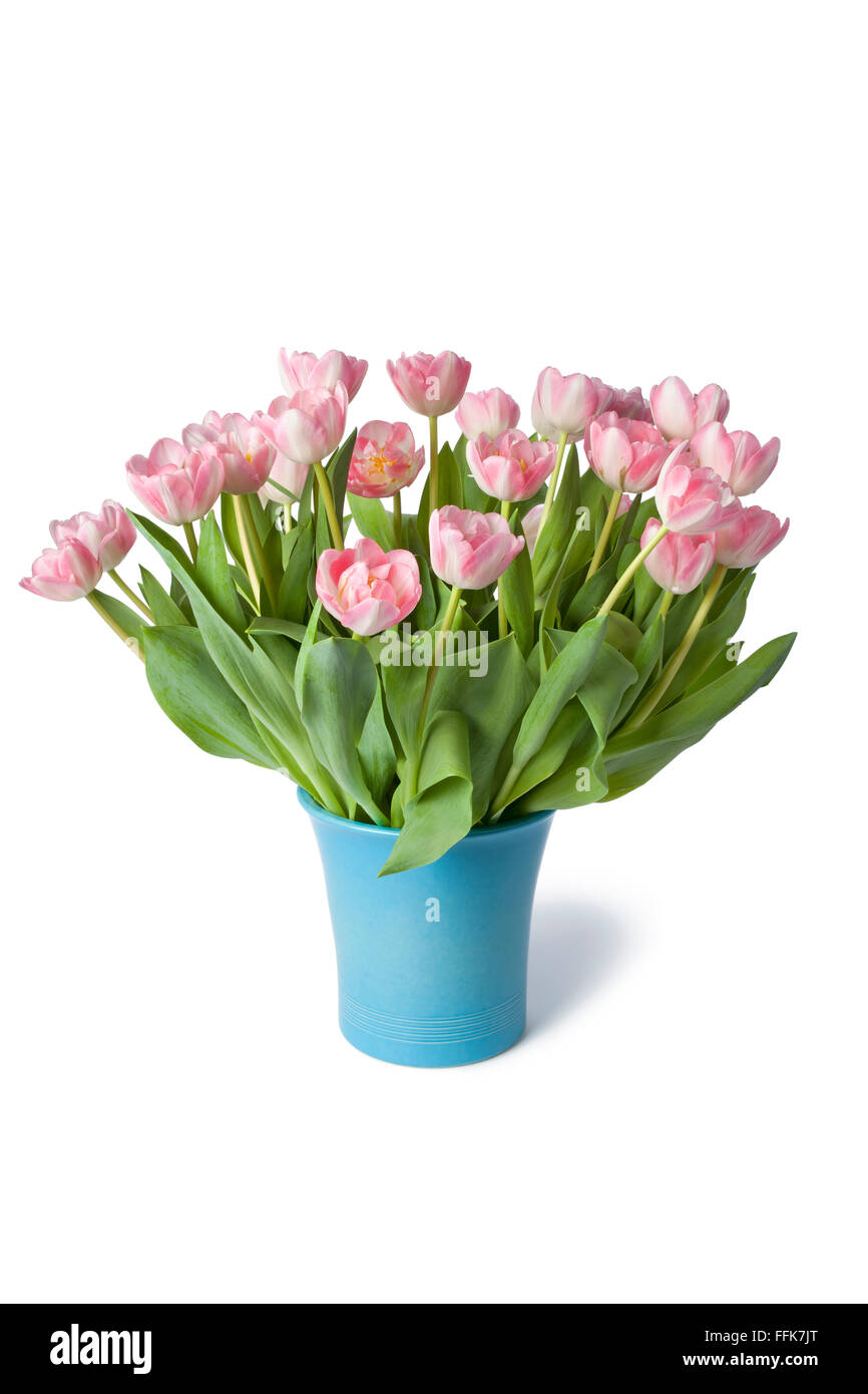 Blue vase with fresh pink tulips on white background - Stock Image