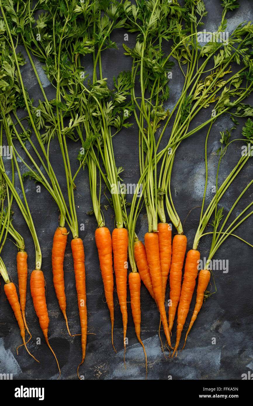 Baby Carrots, farm fresh - Stock Image