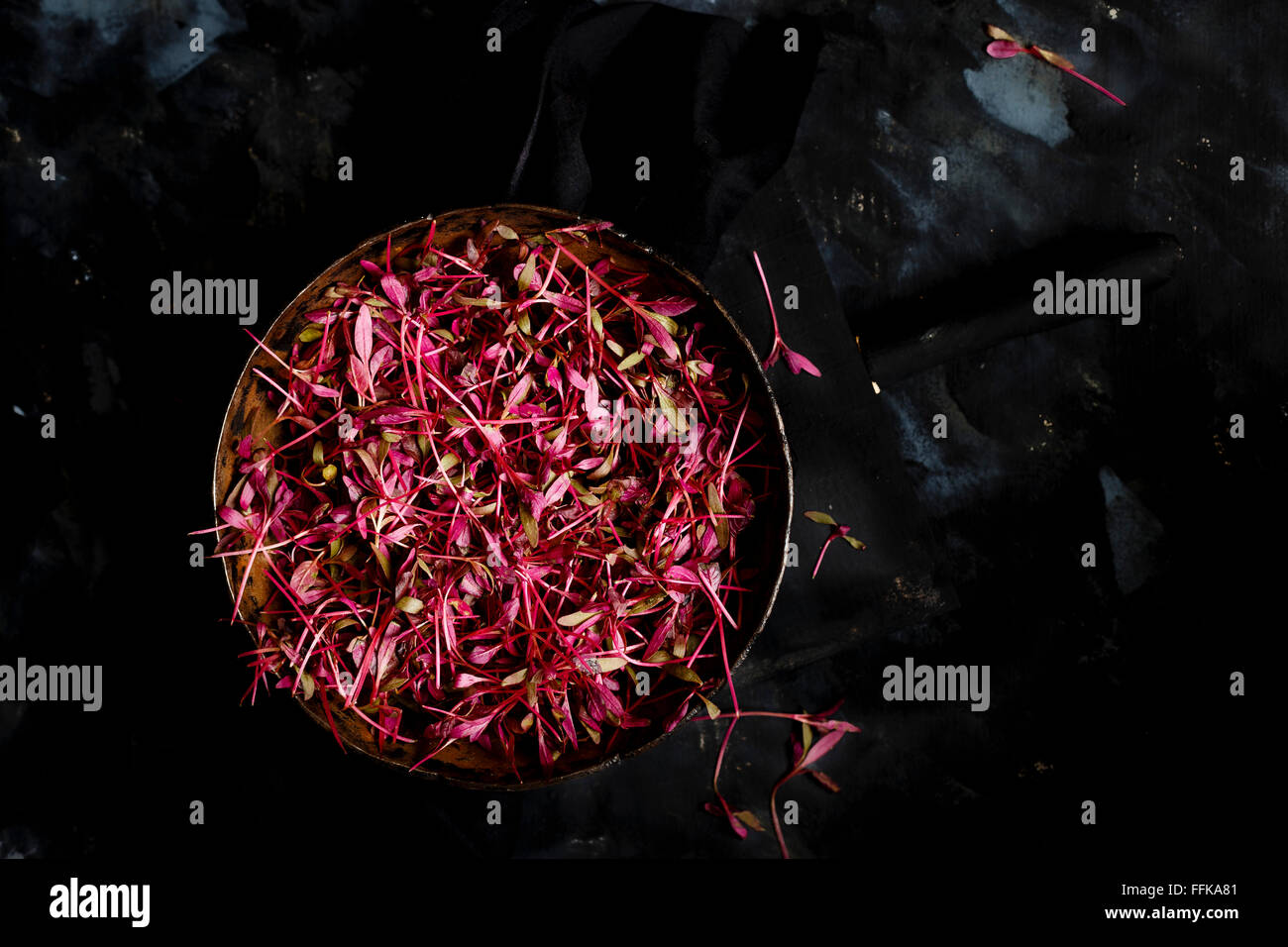 Micro Herbs - Amaranth Leaves - Stock Image