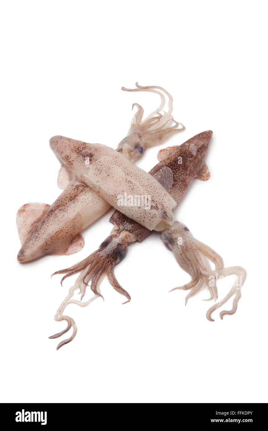 Fresh raw squid on white background - Stock Image