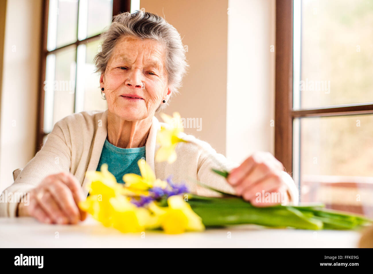 Senior woman by the window arranging bouquet of daffodils - Stock Image