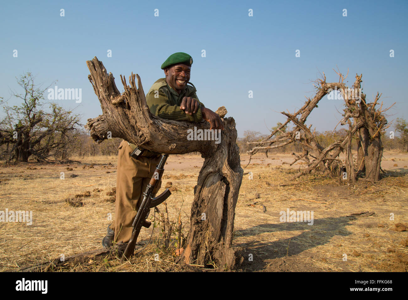 A friendly park ranger in Hwange leaning against a broken tree - Stock Image