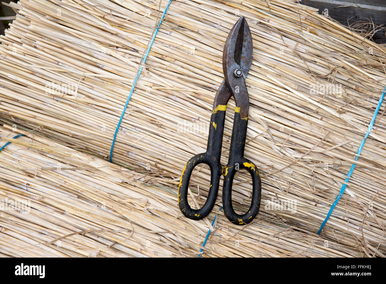 Combed wheat reed used for thatching and the thatcher's scissors - Stock Image
