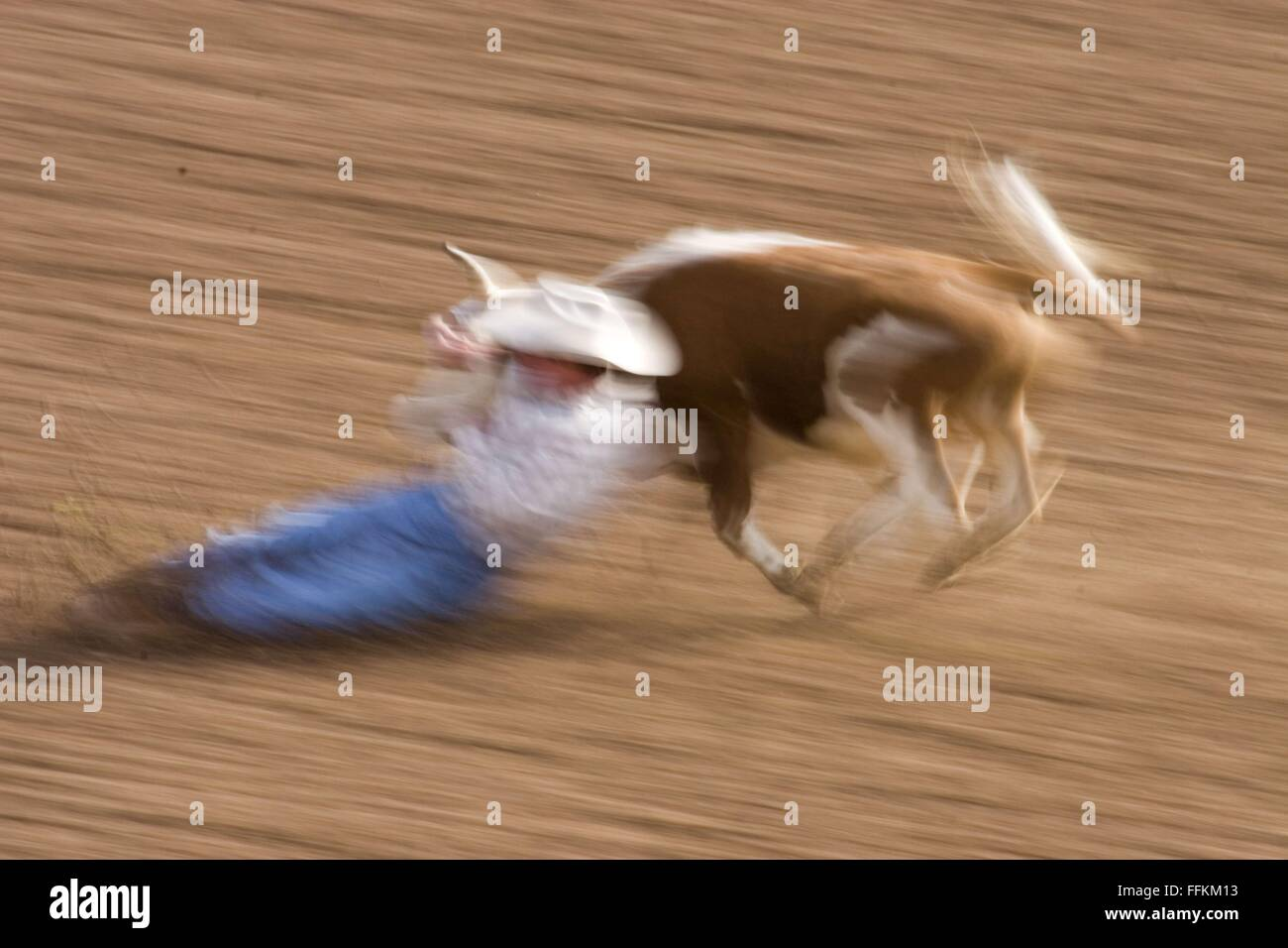 Tucson, Arizona, USA. 17th Feb, 2013. Rodeo blurred action with cowboy on the ground © David H. Wells/ZUMA - Stock Image