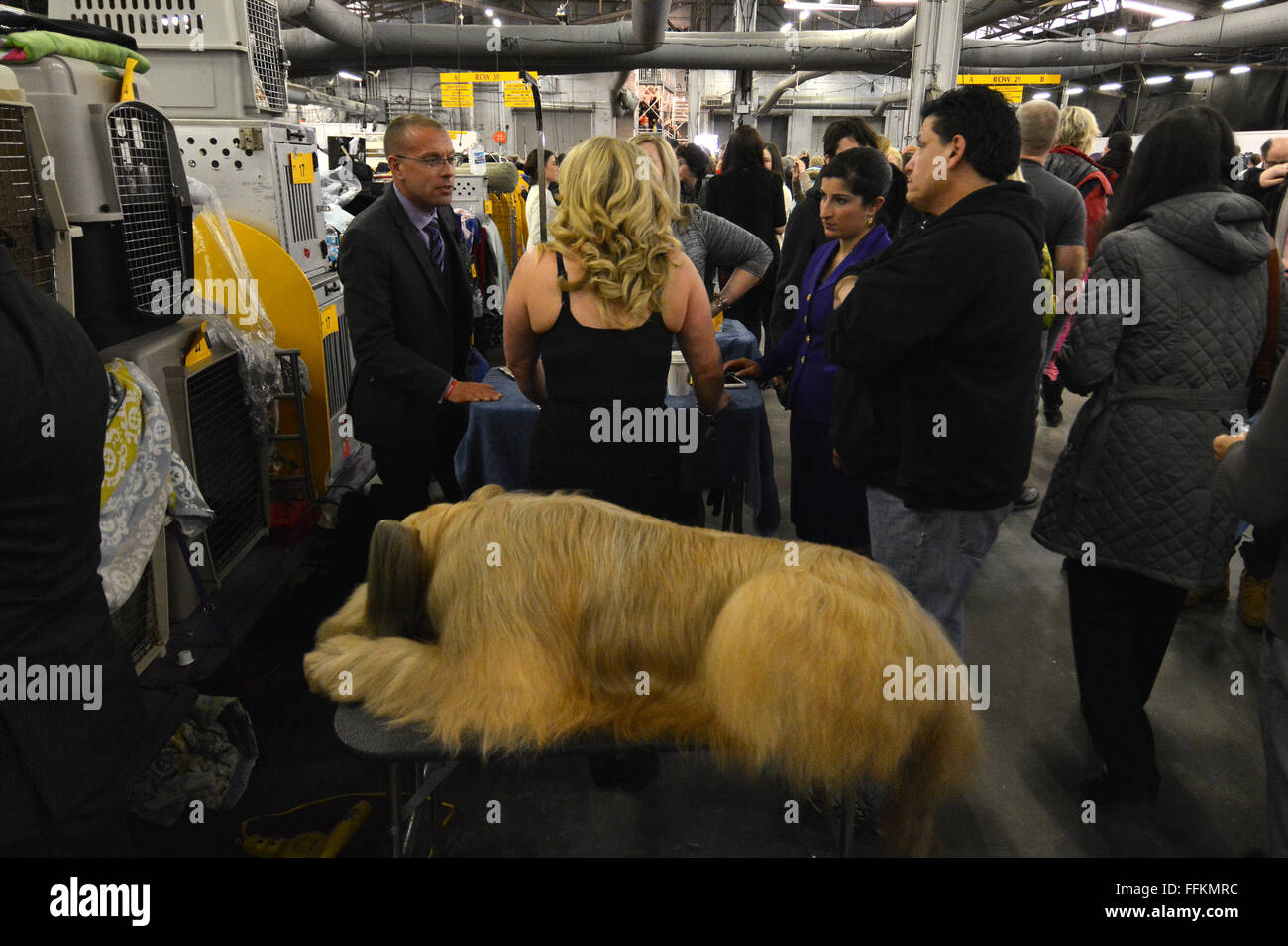 A Briard takes a nap as handlers take a break, backstage during the 2016 Westminster Dog Show in New York. (Photo Stock Photo