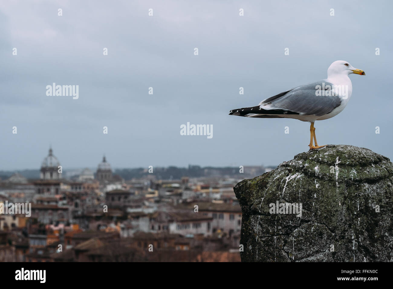 A seagull in front of a view of an artistically blurred view of Rome, Italy on a very cloudy day. - Stock Image