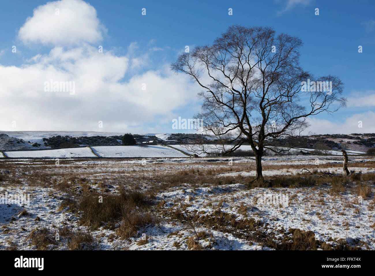 A bare tree in a field at Upper Teesdale in County Durham, England. Snow dusts the field. - Stock Image
