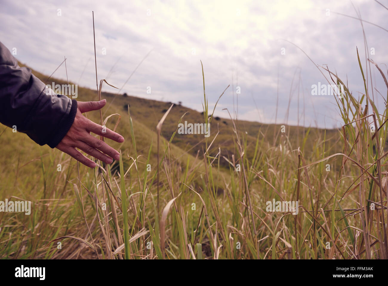 Open our hands to touch the wind grass - Stock Image