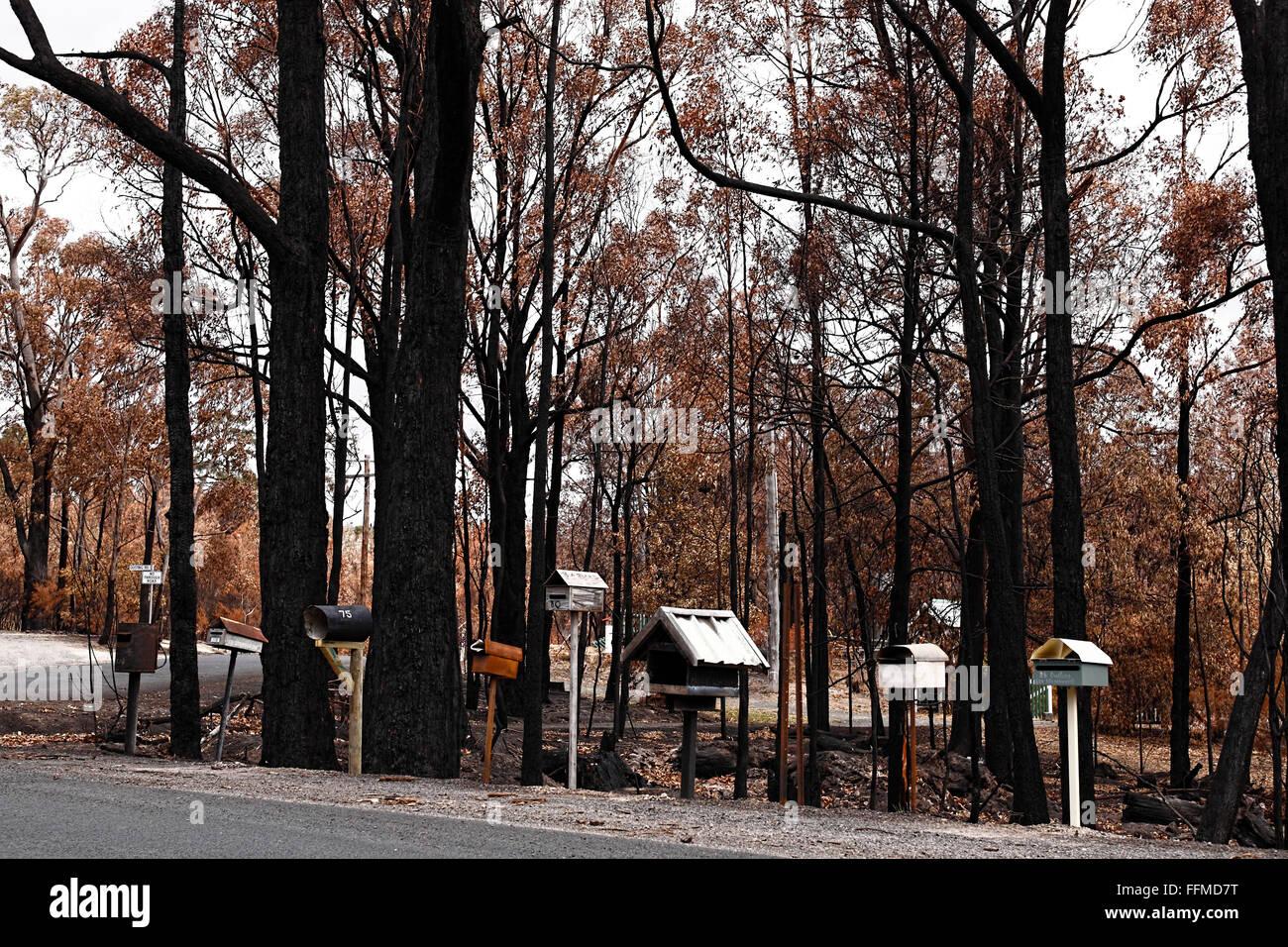 australian bush fire damage,australian bush fire aftermath,post australian bush fire, - Stock Image