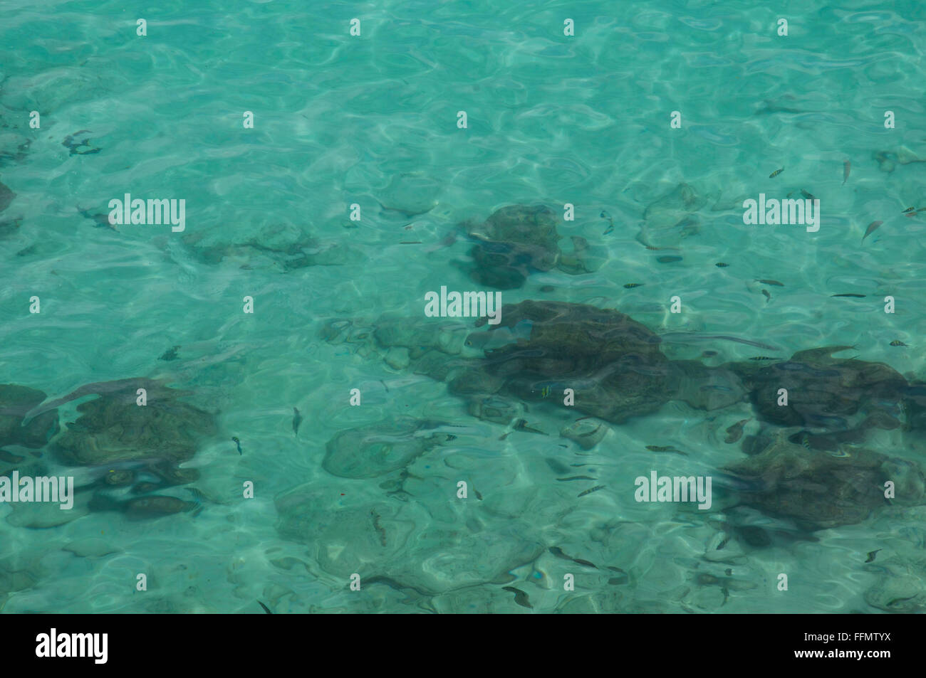 looking down on to clean clear seas showing fish and corals. - Stock Image