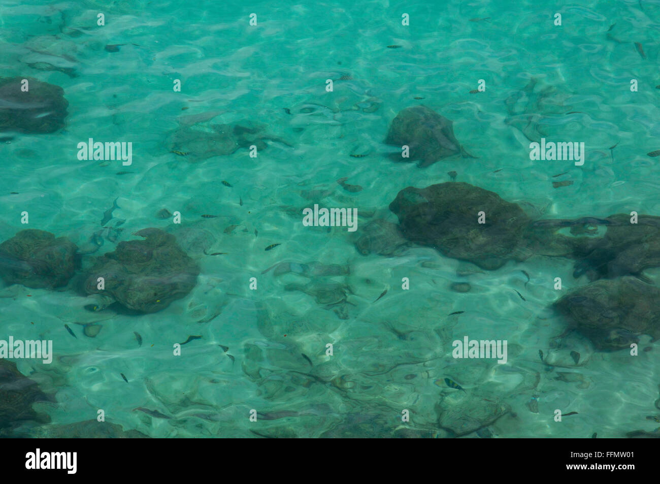 looking down on to clean clear seas showing fish and corals. Stock Photo