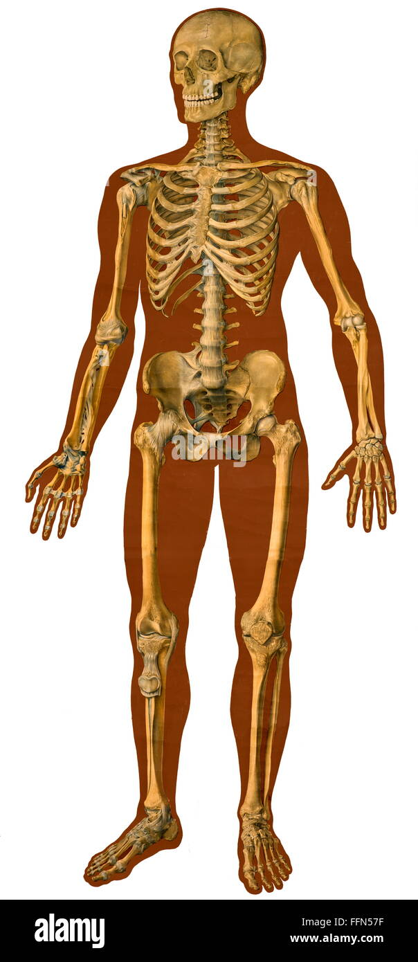 Anatomical Chart Stock Photos & Anatomical Chart Stock Images - Alamy