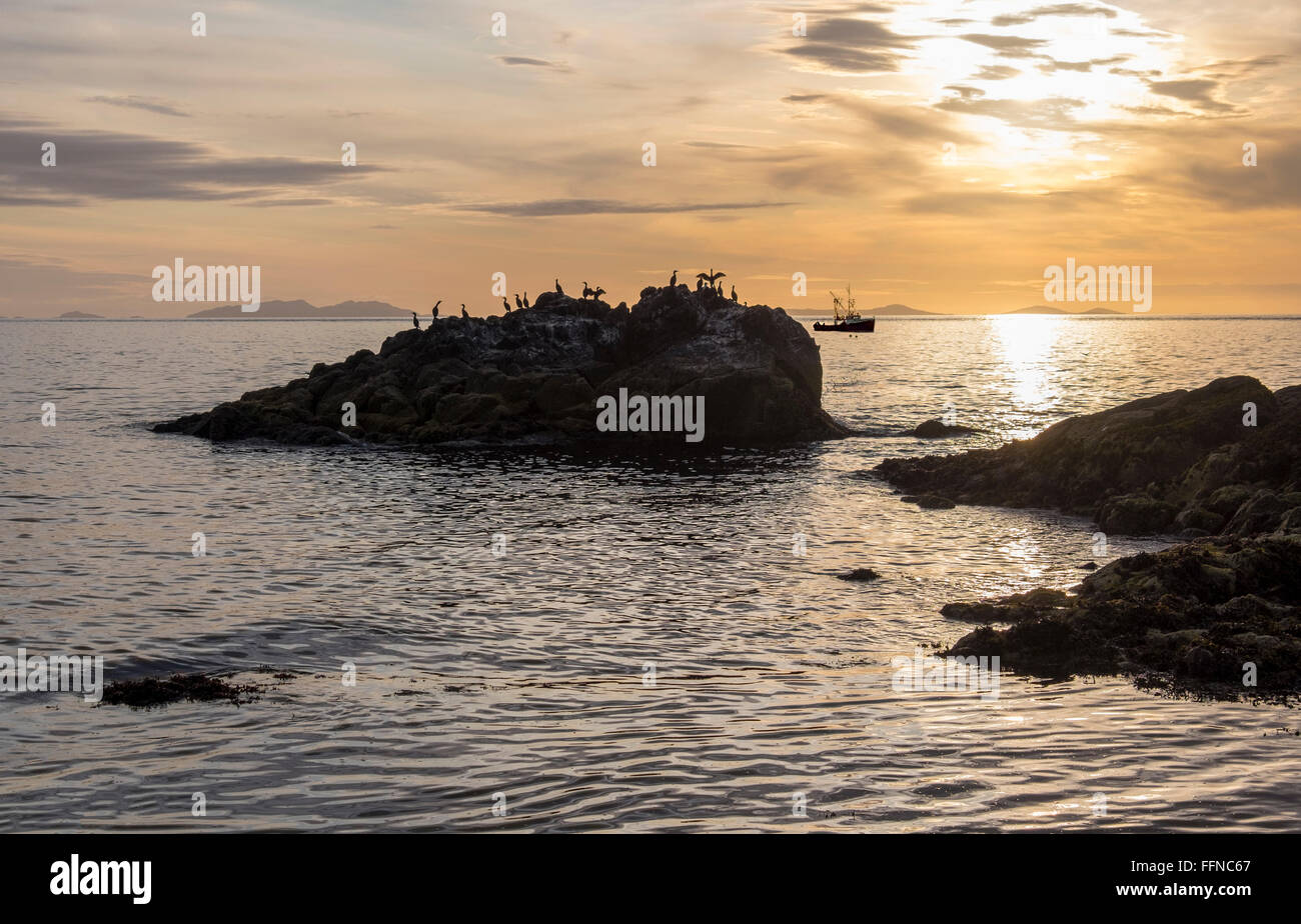 cormorants or shags silhouetted at sunset with fishing boat - Stock Image