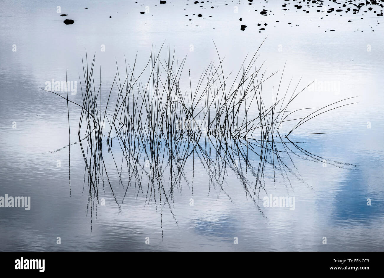 reeds abstract reflection calm still tranquil art - Stock Image