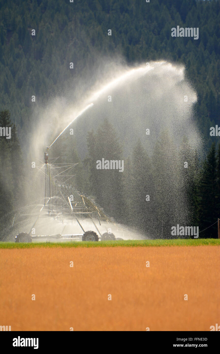 Field Irrigation, Water canon - Stock Image