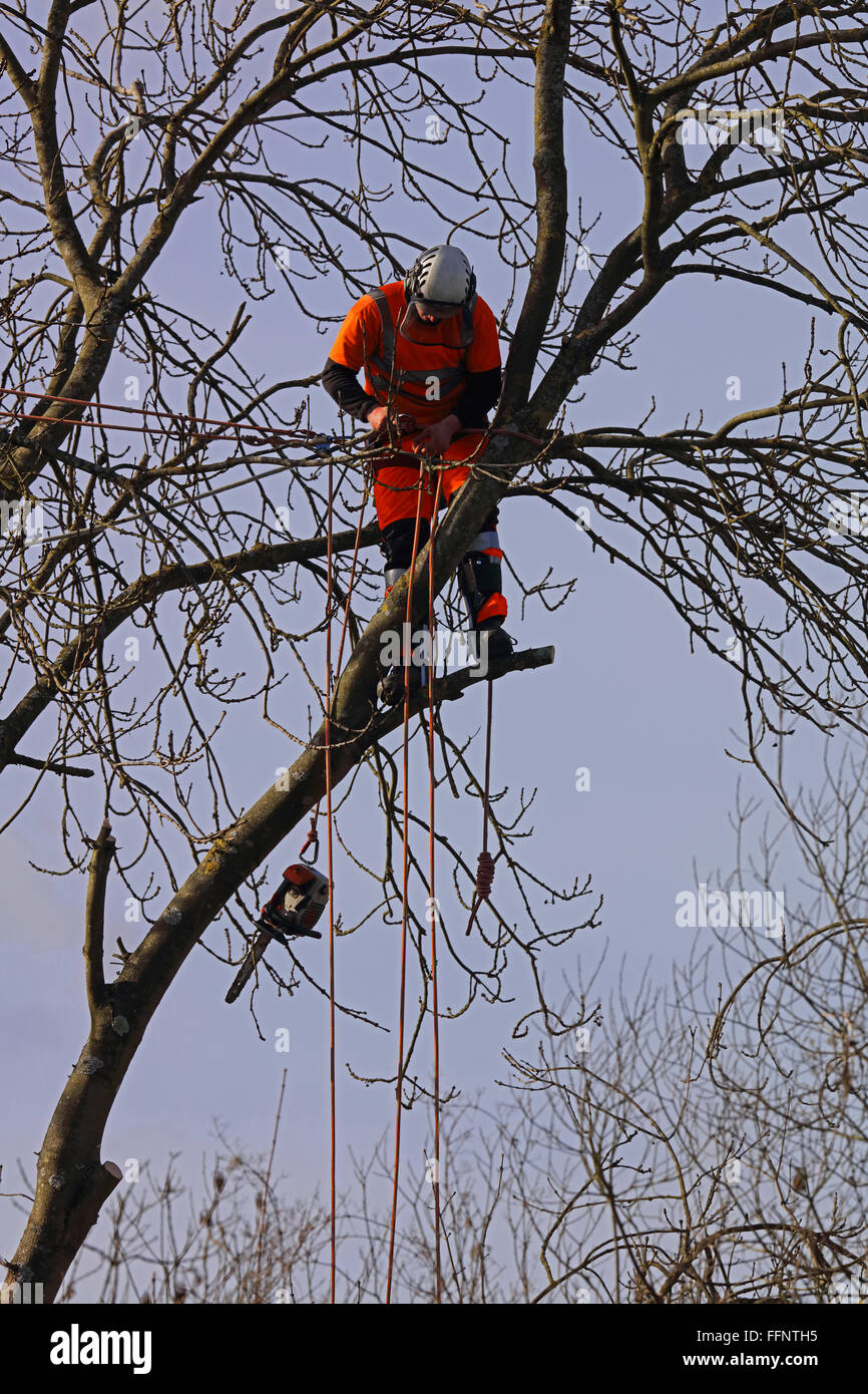 A high visibility clothed arborialist at work high up in the trees and safely roped up to another tree and his chainsaw - Stock Image
