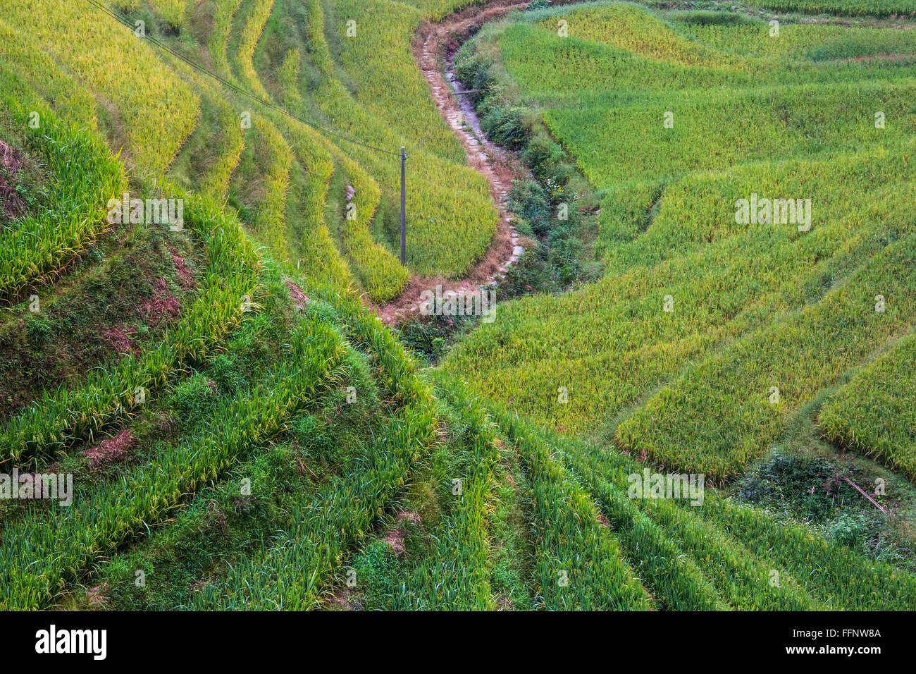 Dragon Backbone Rice Terraces. Longji. China - Stock Image
