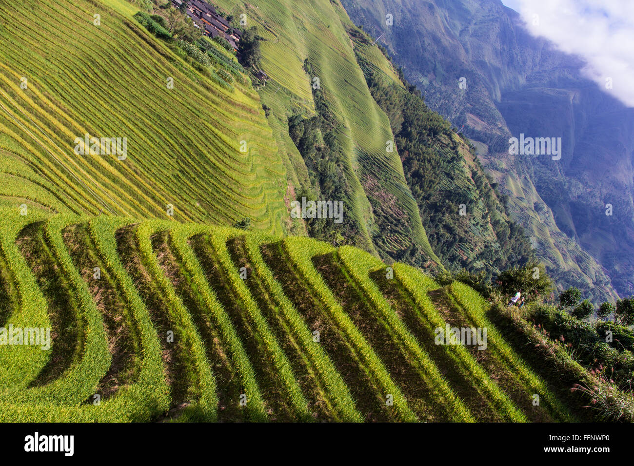 Dragon Backbone Rice Terraces. Longji. China - Stock Image