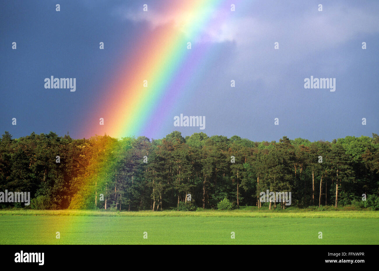 close rainbow in front of a forest - Stock Image