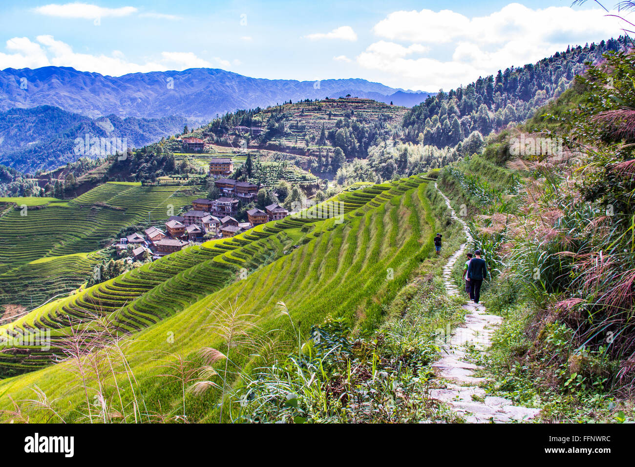 Path in Dragon Backbone Rice Terraces. Longji. China - Stock Image