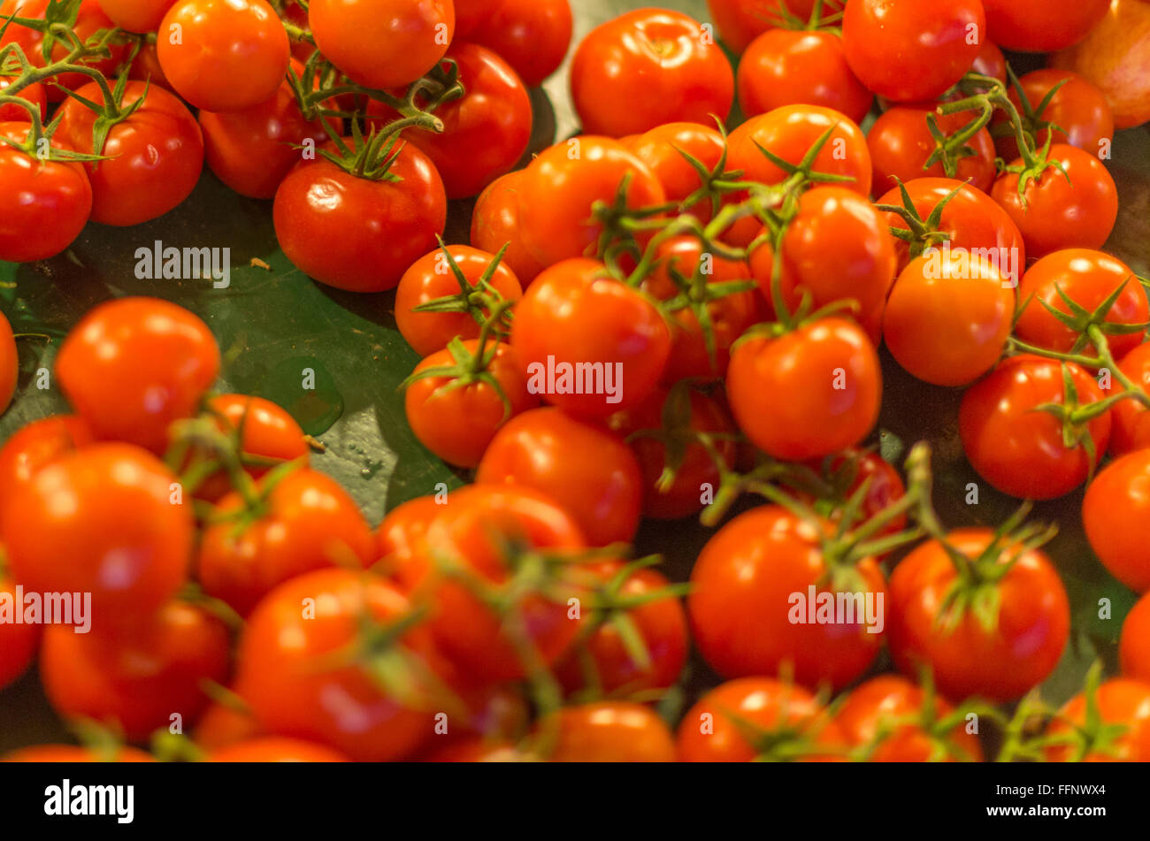 Red tomatoes on the vine - Stock Image