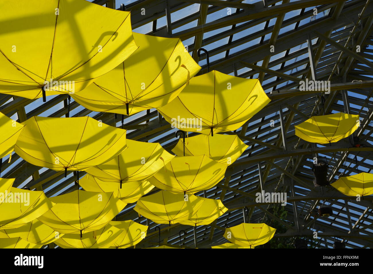 Yellow Umbrellas Hang From The Ceiling During The 2015 Spring Flower Stock Photo Alamy