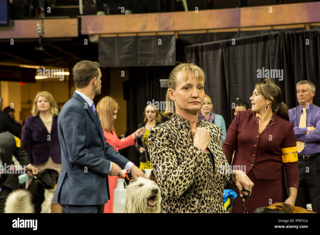 New York, USA. 16th February, 2016. A dog handler with a dog comb in her hair waits to enter the ring with her dog Stock Photo
