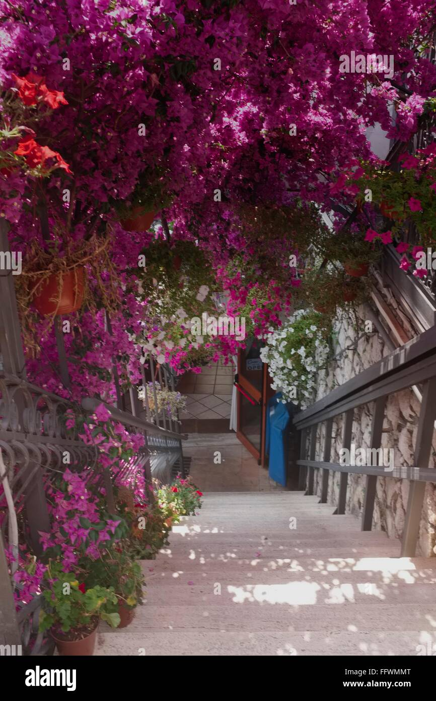 Beautiful bourgainvillea line the stirs down to a Taorrmina restaurant Stock Photo