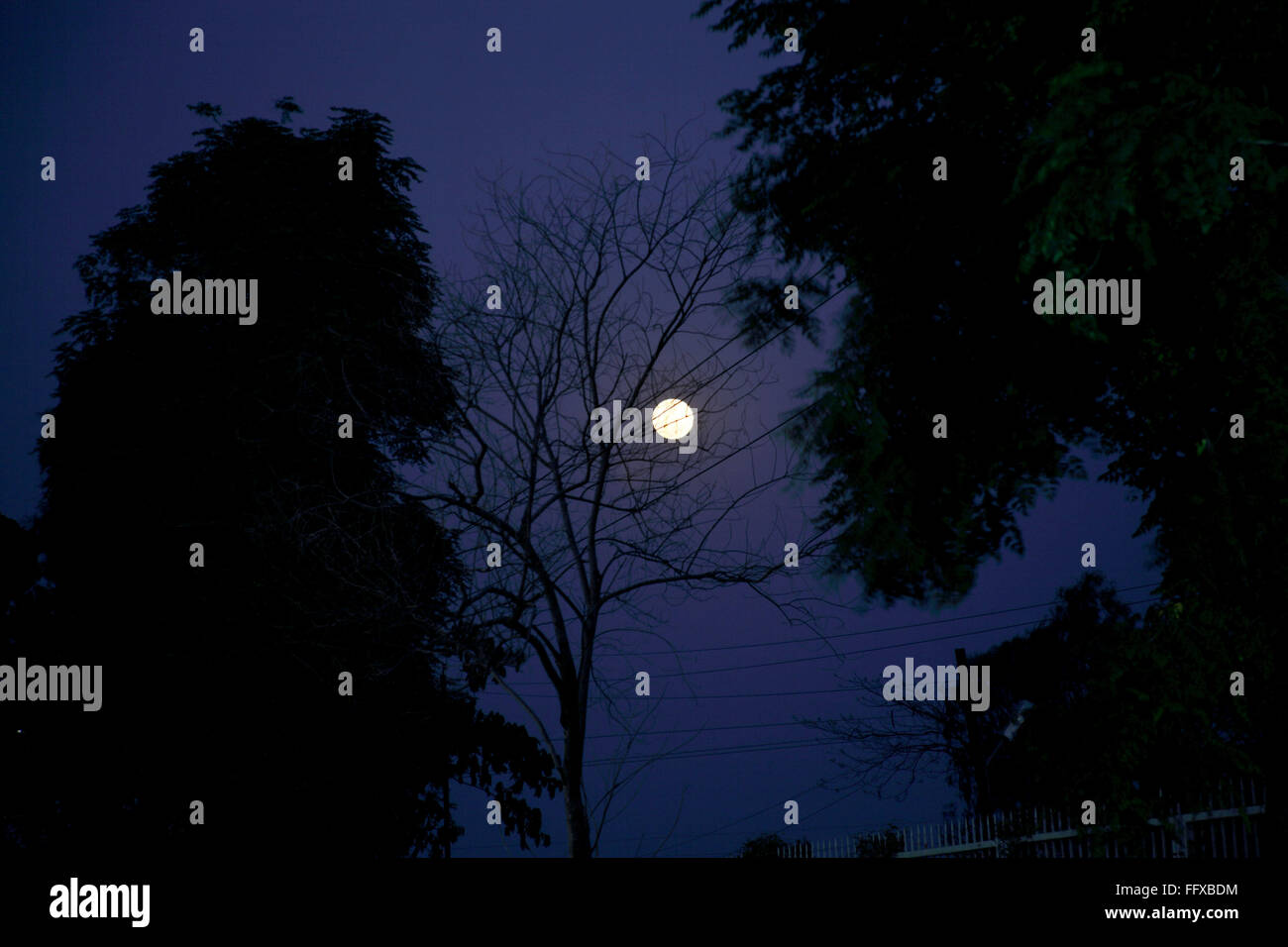 Nightscape moon light full moon behind trees - Stock Image
