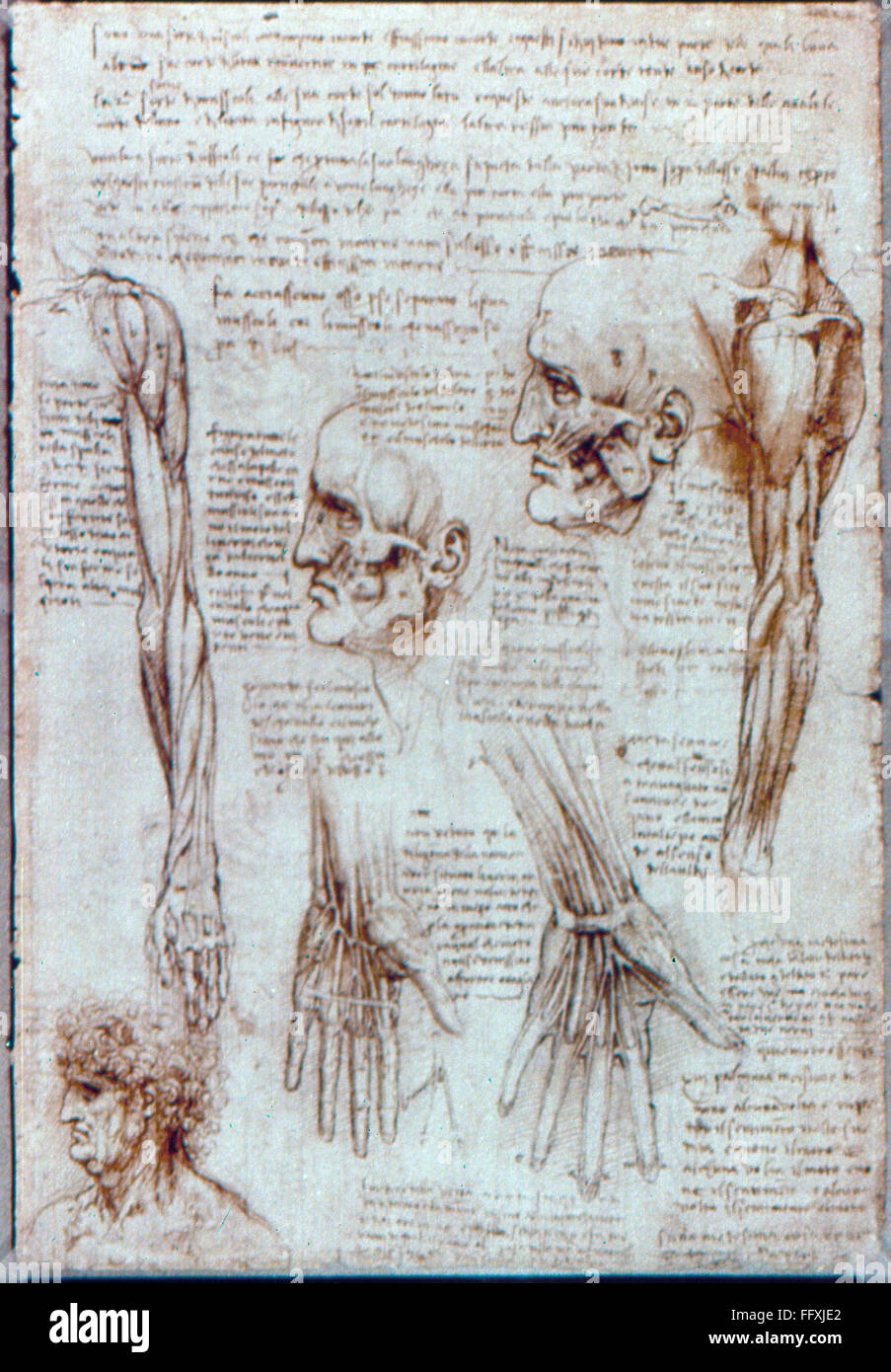 DA VINCI: ANATOMY, c1510. /nPen and ink studies of heads and arms ...