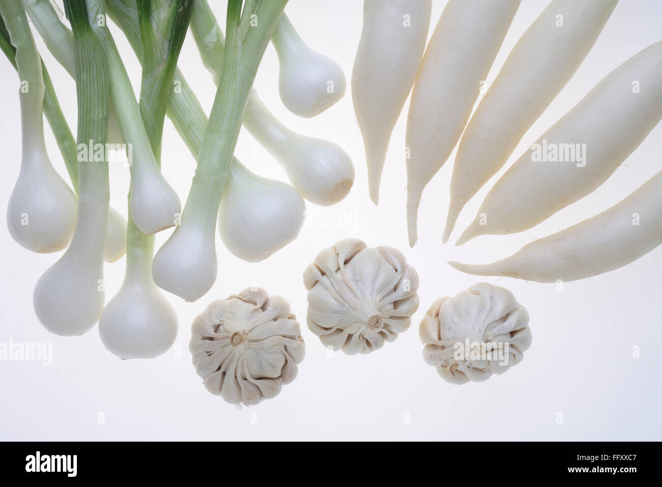 Vegetable and spices , garlic radishes with onion on white background - Stock Image