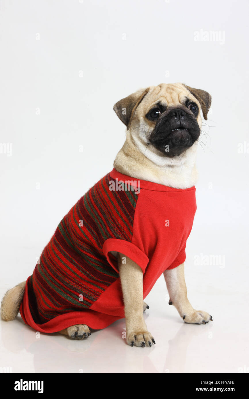 Pug clothes online india