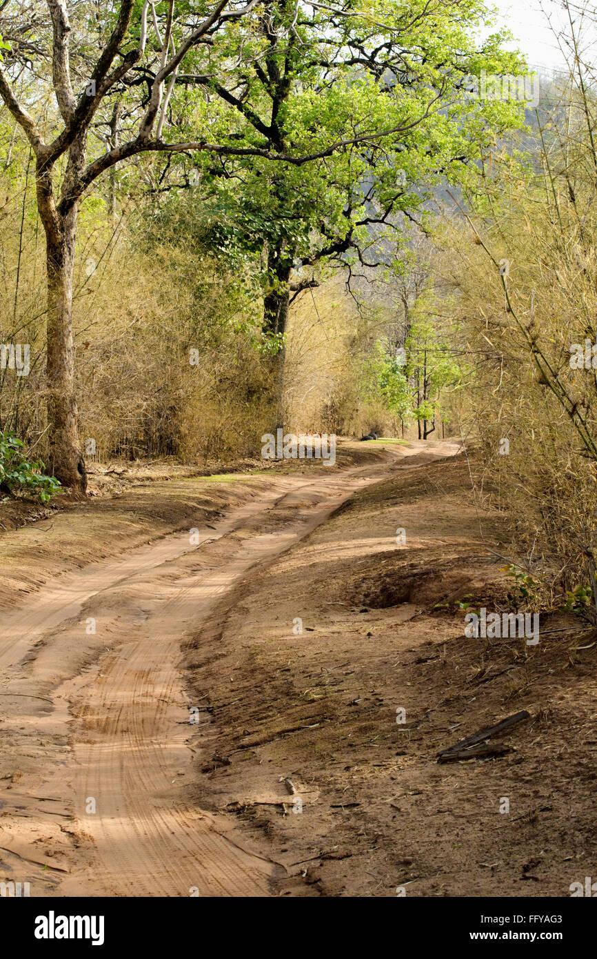 Forest track at bandhavgarh national park madhya pradesh India - Stock Image