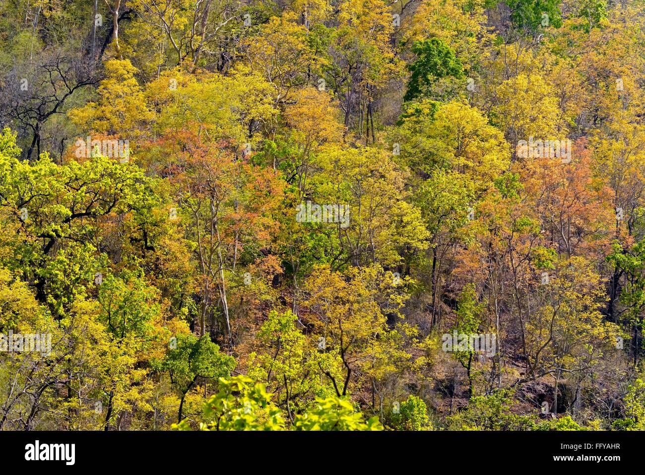 Forests of bandhavgarh national park madhya pradesh India - Stock Image