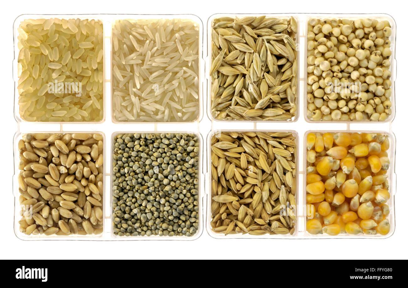 Food grains rice barley jowar wheat bajra paddy rice and corn in square dish ; India - Stock Image