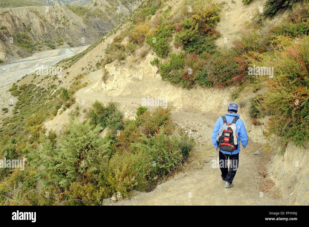 Trekker ; Manang ; Nepal - Stock Image
