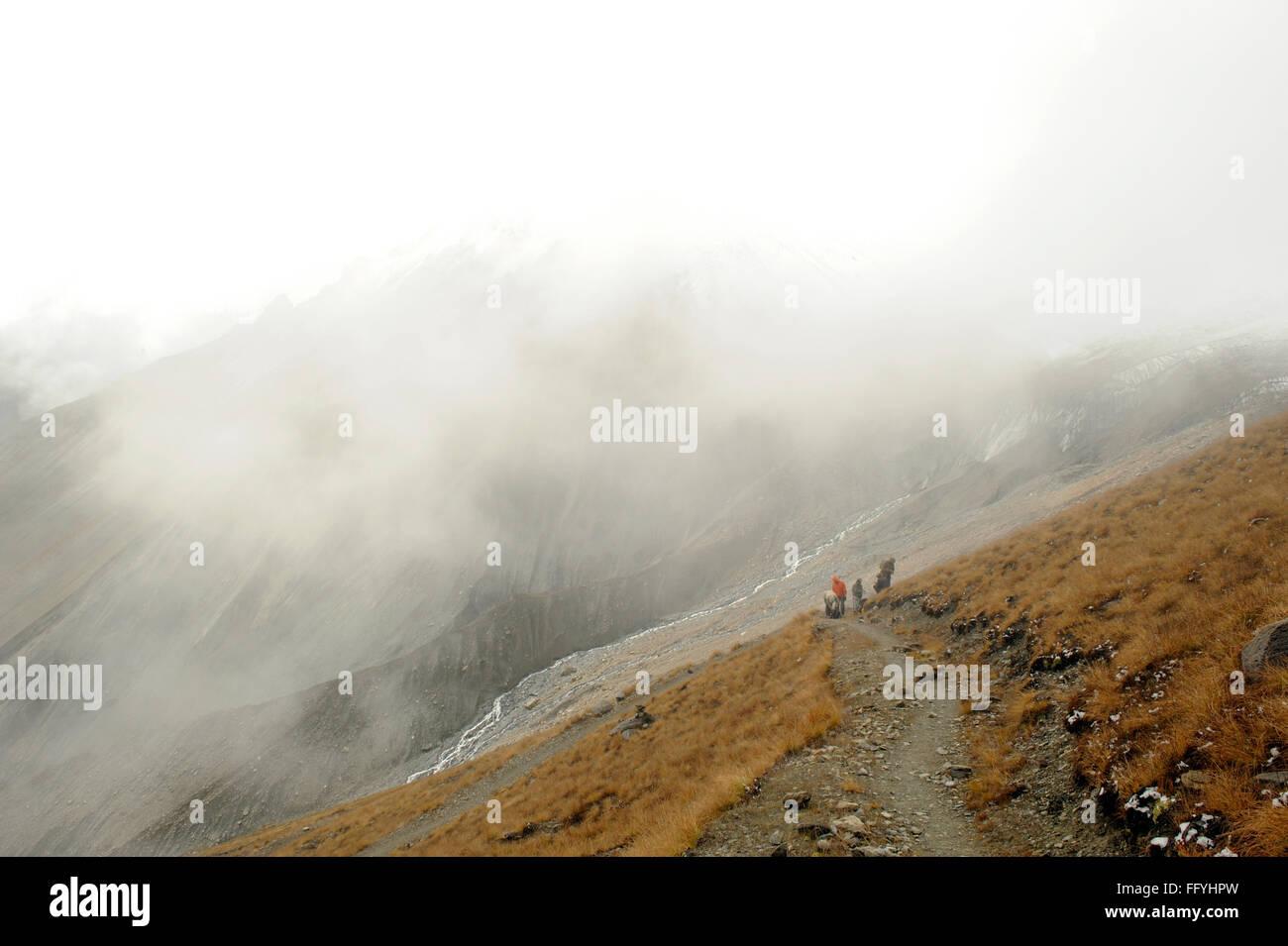 Trekker way to Thilicho ; Nepal - Stock Image