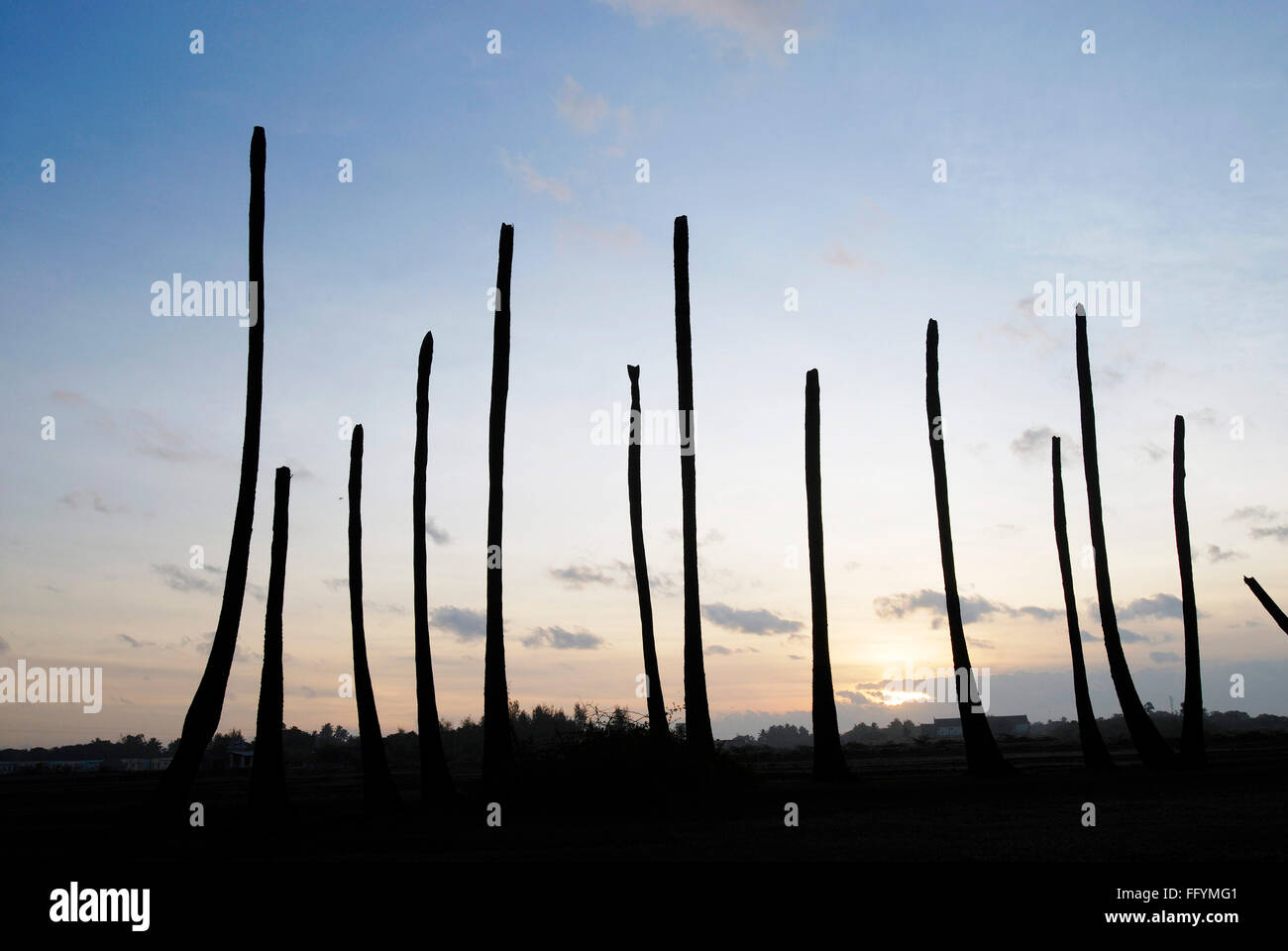 Drought , long period of time without rain palm trees in silhouette , Tamil Nadu , India - Stock Image