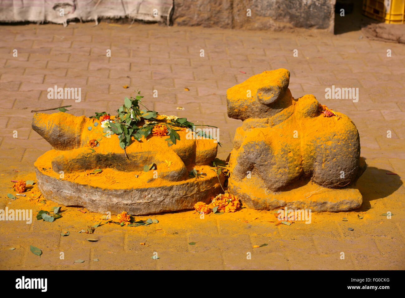 Statues of tortoise and Nandi bail (bull) immersed in turmeric powder at the  Jejuri temple , Pune , Maharashtra - Stock Image