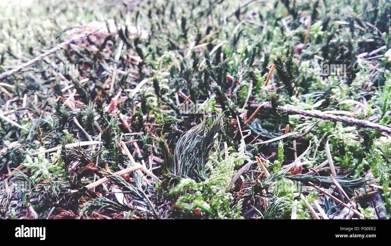 Full Frame Shot Of Seaweeds At Shore - Stock Image