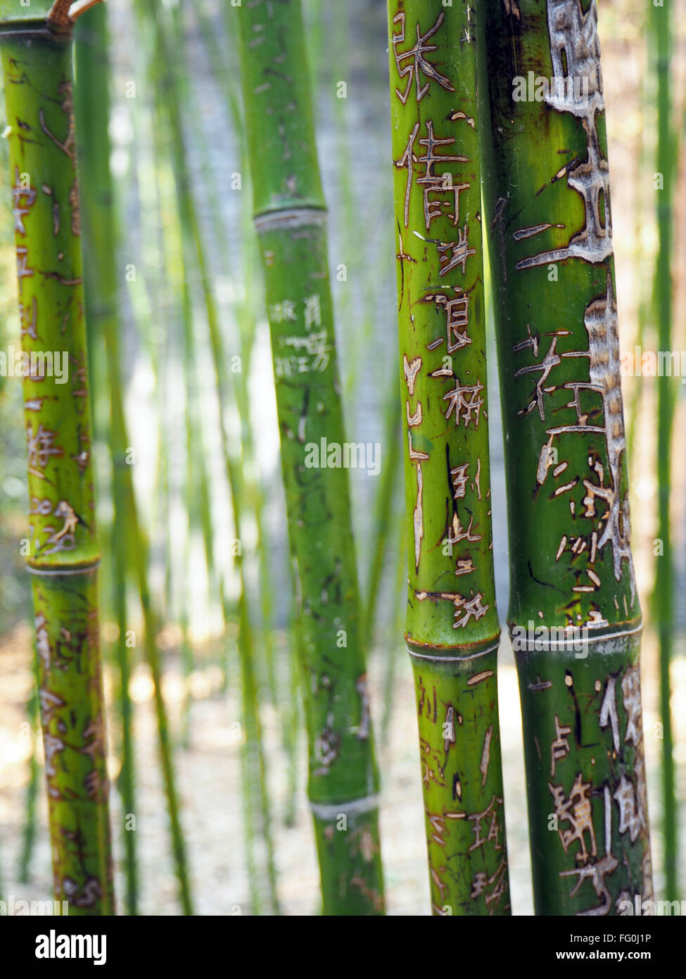 Close-Up Of Scripts Carved On Bamboo - Stock Image