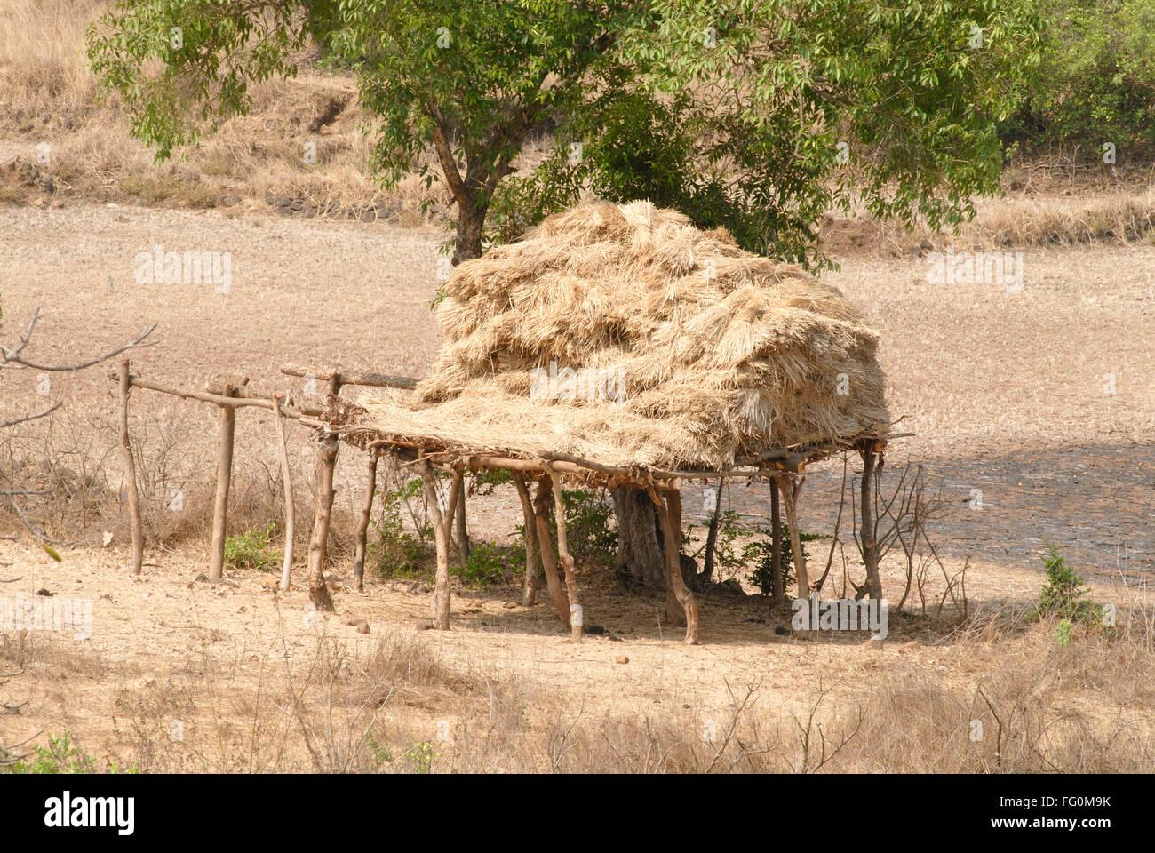 Hay sack hayrick kept on platform of props dry grass , Village Jambhulwadi , Pen, Raigad District , Maharashtra - Stock Image