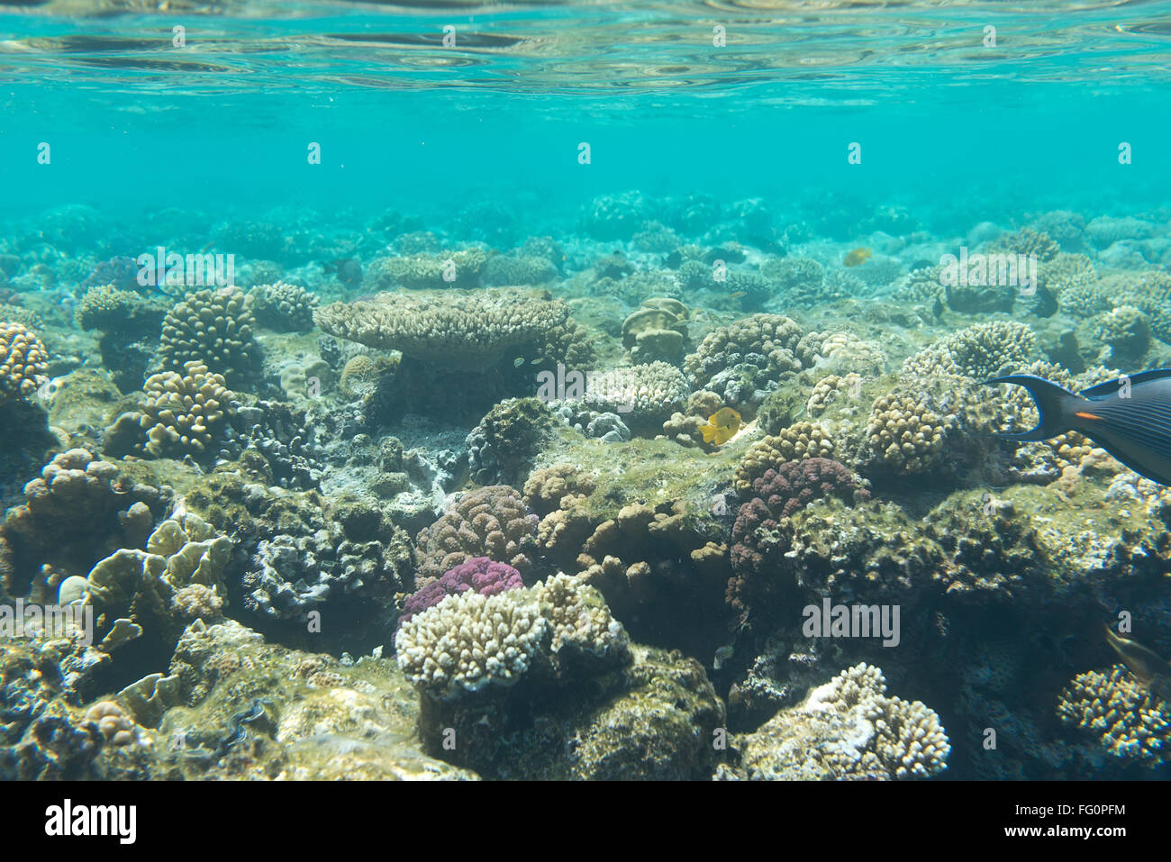 F G Coral Reefs