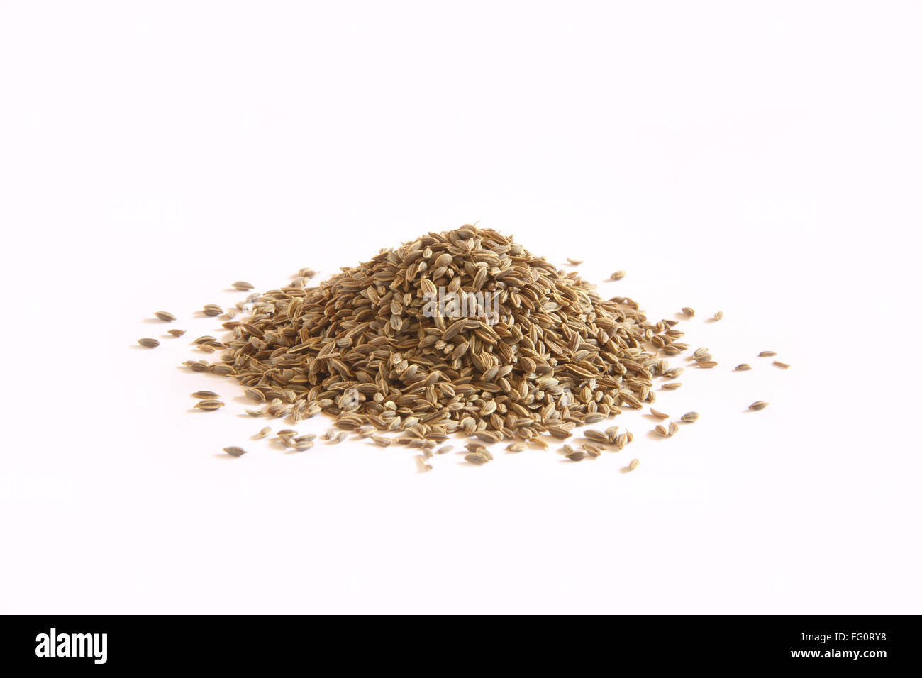 Indian spice , Dill Sowa Anethum sowa on white background - Stock Image
